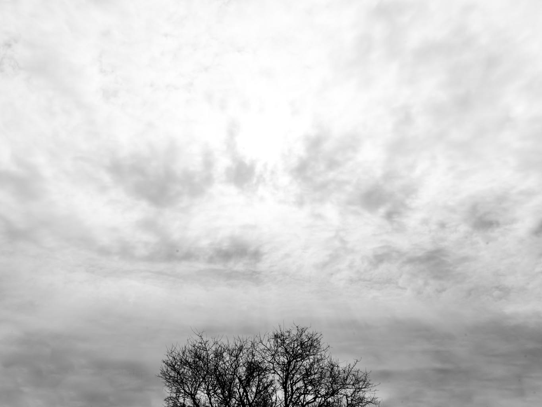 Verso il cielo_monicamaurino