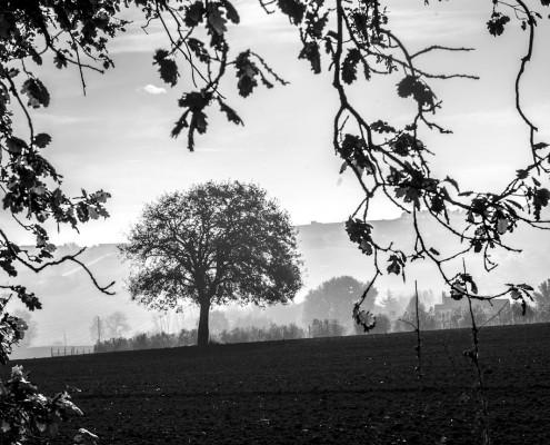 L'albero_monicamaurino
